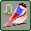 Download Birds Sounds Relax and Sleep App